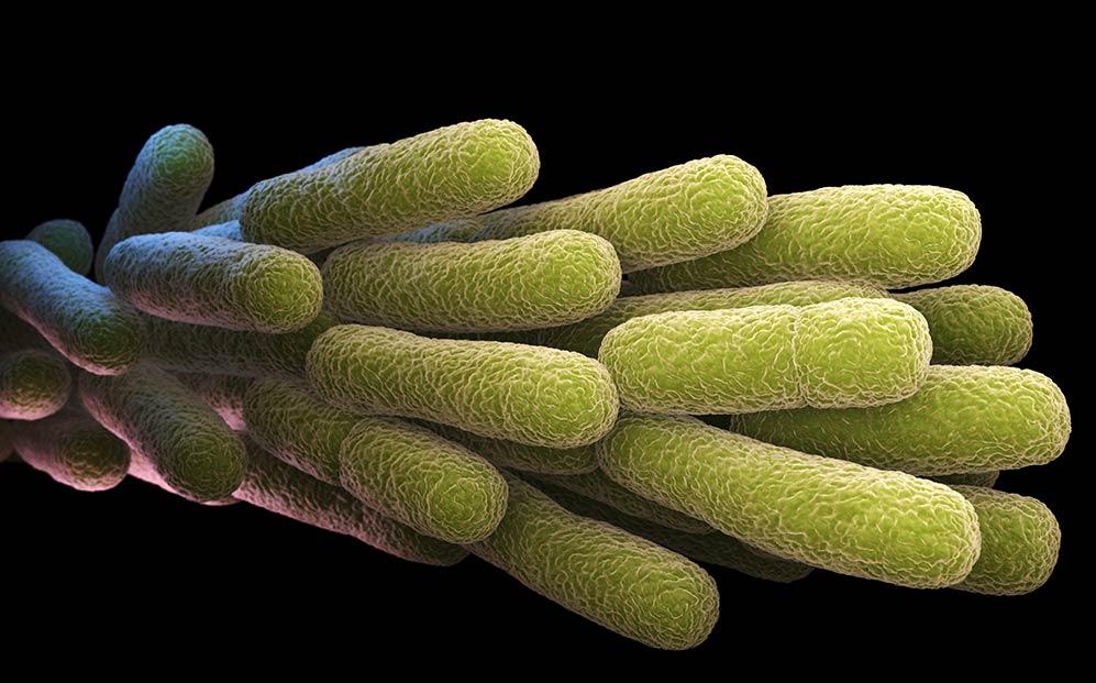 legionella testing history image Allium Environmental
