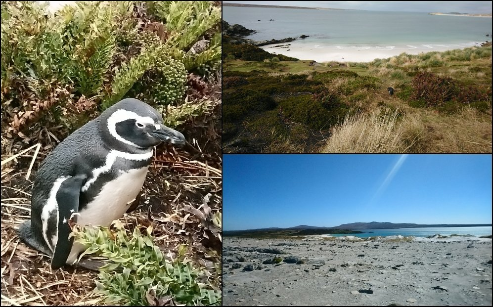 Asbestos survey Falkland Islands